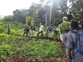 Where to go in Africa in January - gorilla trekking