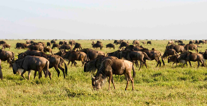 Where to go in Africa in January - Southern Serengeti