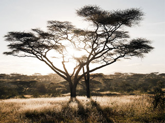 Where to go in Africa in January - Serengeti sunrise