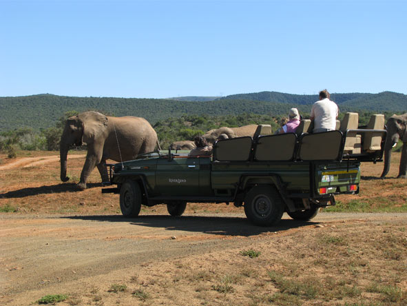 Affordable Cape Town, Gardens & Safari - Game viewing