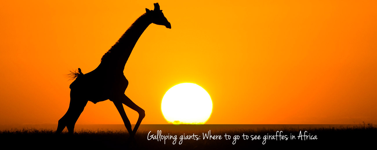 Where to Go in Africa to see Giraffe