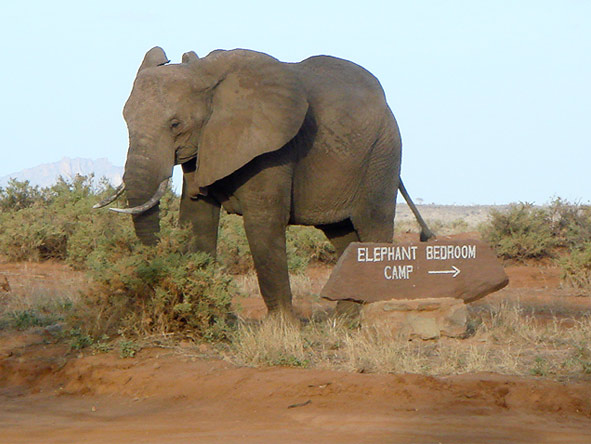 Discover Kenya Private 4x4 Safari - Elephants