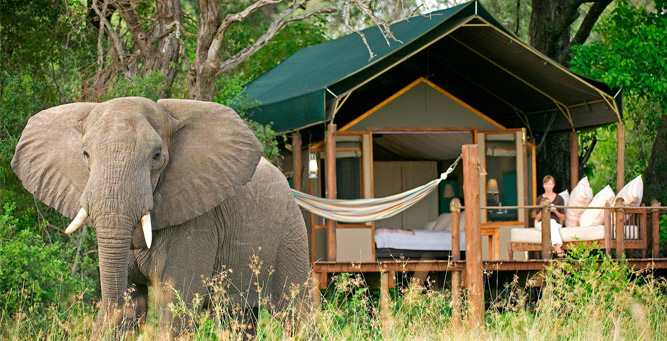How to Travel Safely in Africa - elephant in camp
