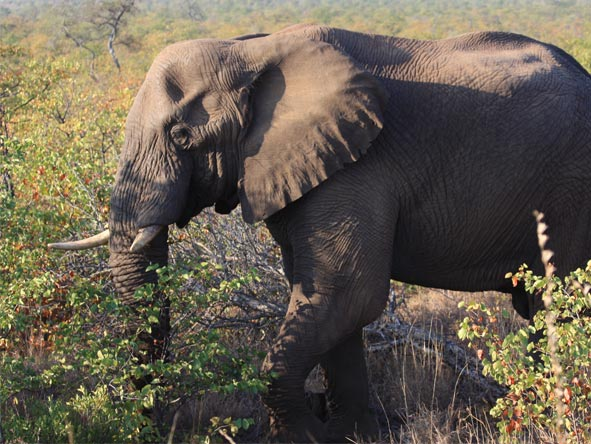 Safari & Seychelles Affordable Adventure - Elephants