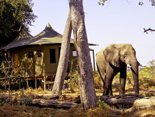 Best of Botswana Safari - Up-close game viewing