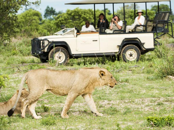 Best of Botswana Safari - Big cat country