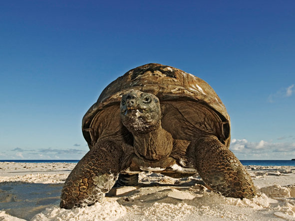 Luxury Seychelles Spa Holiday - Giant tortoises