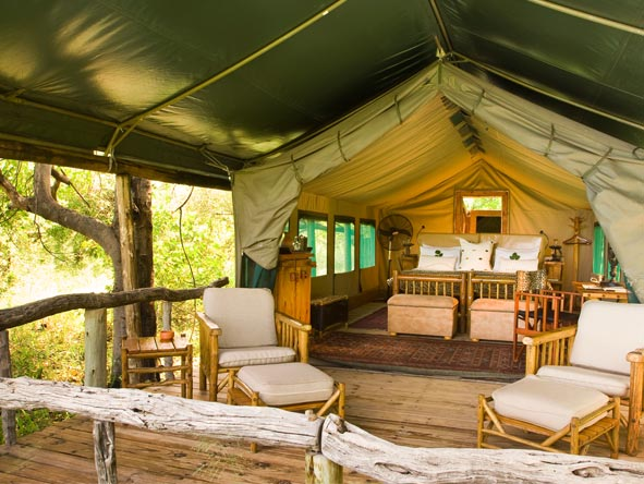 Camp Moremi features classic tented suites tucked away under giant riverside trees.