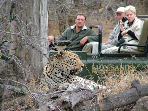 Lion Sands camps pride themselves on the quality of their game viewing: exceptional Big 5 sightings await.