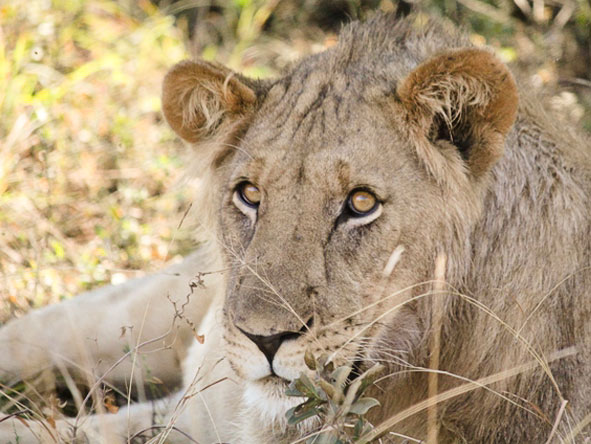 Best of South Africa Train Journey - Big cats