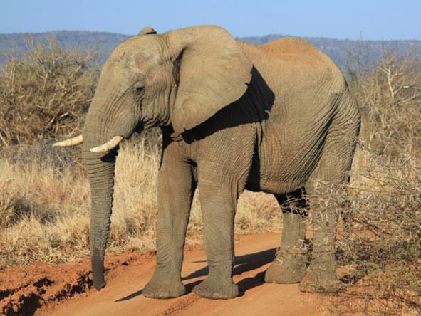 Best of South Africa Train Journey - Elephants