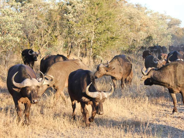Best of South Africa Train Journey - Kruger game drives