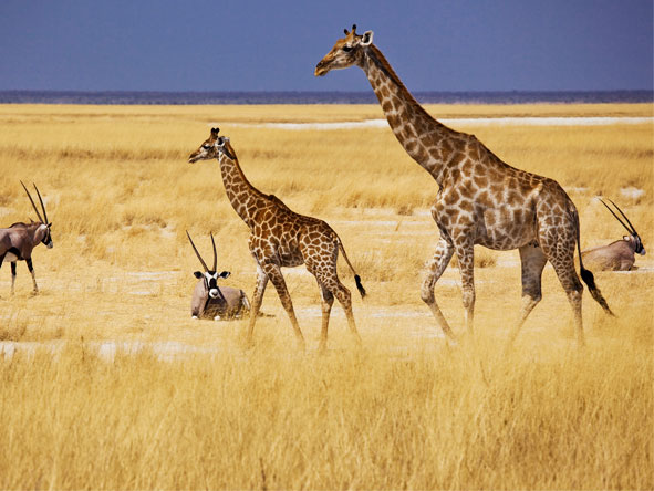 Luxury South African & Namibia Rail Journey - Game drives