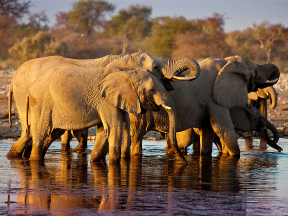 Luxury South African & Namibia Rail Journey - Year-round game viewing