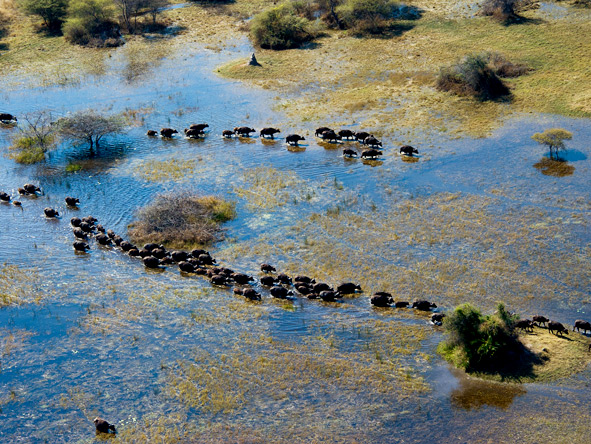Journey through Botswana - Fly-in safari