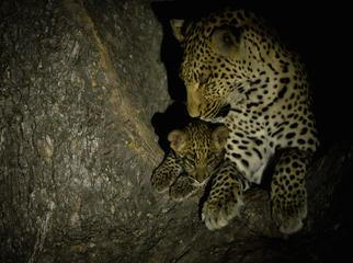 Sunrise & Twilight Photography - leopards in the darkness