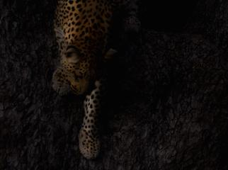 Sunrise & Twilight Photography - lone leopard