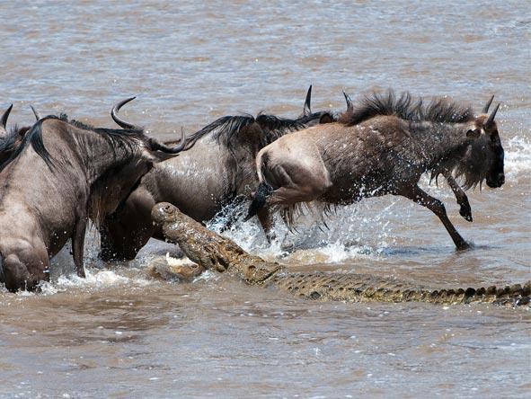 Photographic Safaris - gallery4