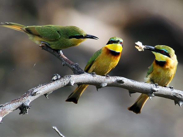 Photographic Safaris - gallery6