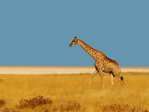 Photographic Safaris - gallery10