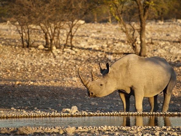 Namibia Circuit - Black rhino