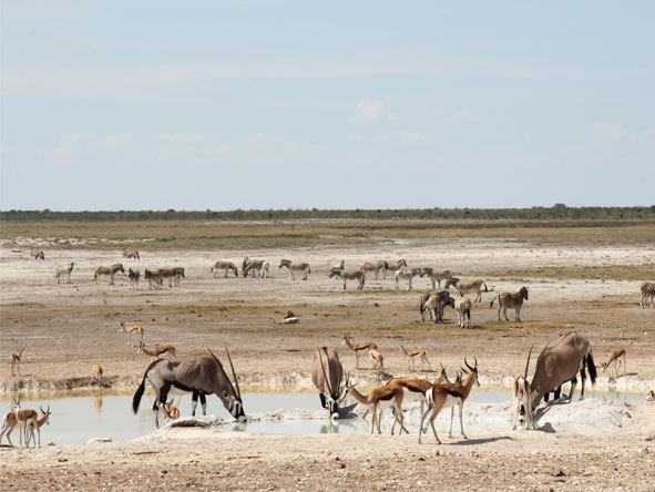 Namibia Circuit - Etosha game drives