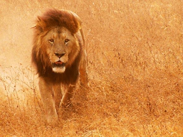 Photographic Safaris - gallery2