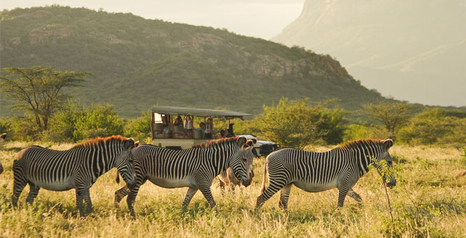 Where to go in Africa in February - Samburu National Reserve zebra