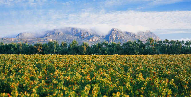 Where to go in Africa in February - Constantia Winelands