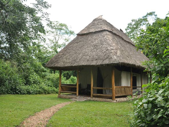 Chimp Habituation, Gorillas & Wildlife - Traditional thatched tents