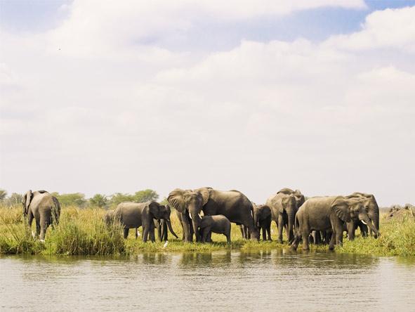Mvuu & Kaya Mawa Adventure - River safaris