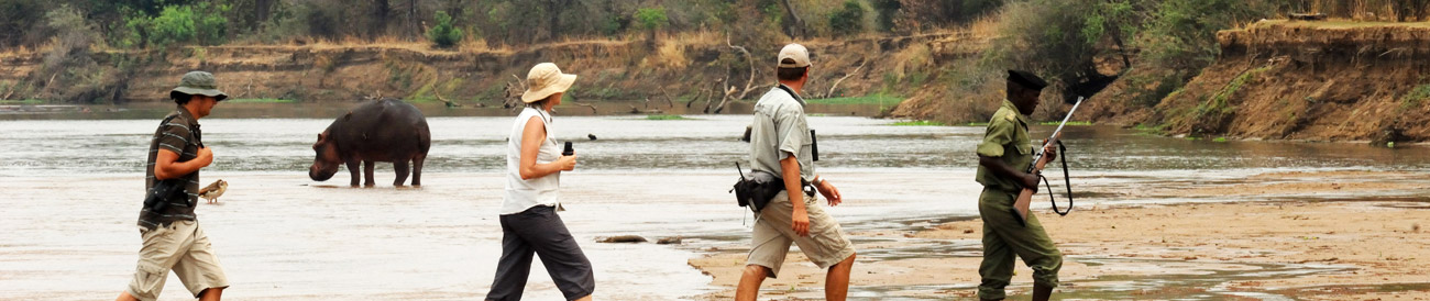 Thrilling Zambian Walking Safari