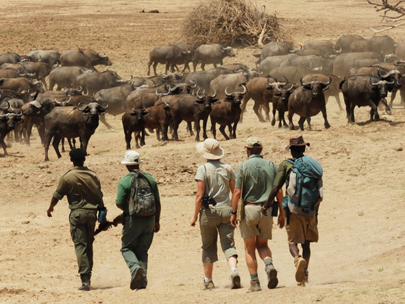 Thrilling Zambian Walking Safari - Game viewing on foot