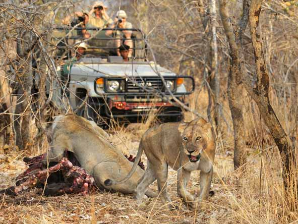 Thrilling Zambian Walking Safari - Game drives
