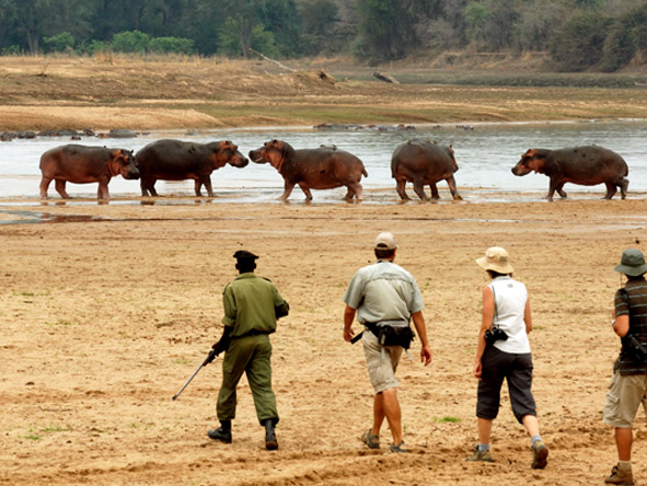 Zambian Walking Safari Adventure - Game viewing on foot