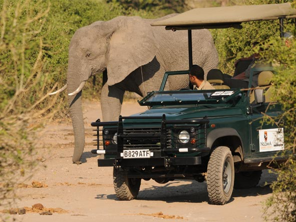 Ngoma Safari Lodge - Game drives