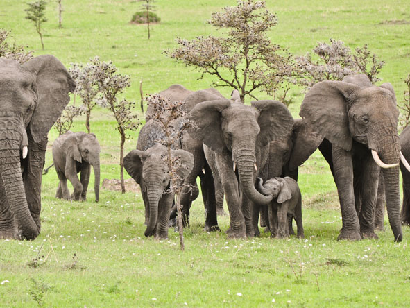 Serengeti Safari Adventure - Big game sightings