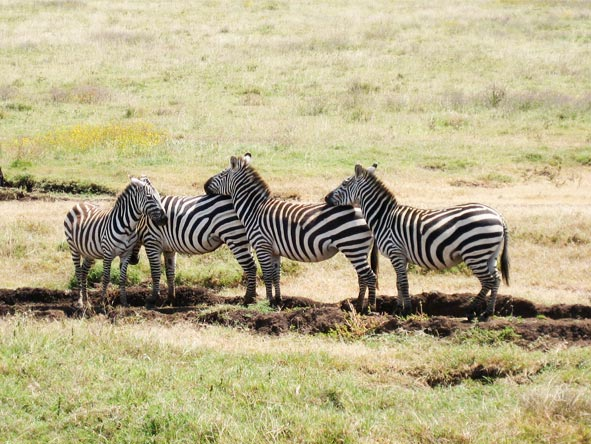 Serengeti Safari Adventure - Annual migration