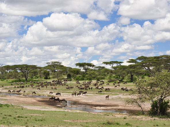 Serengeti Safari Adventure - Rolling savannahs