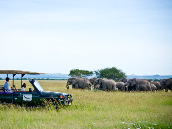 Grumeti Serengeti Tented Camp - Annual migration