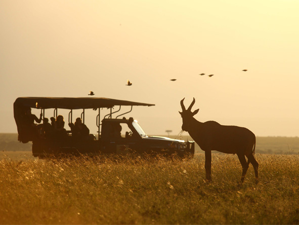 Discover Kenya Wilderness Adventure - Wildebeest migration
