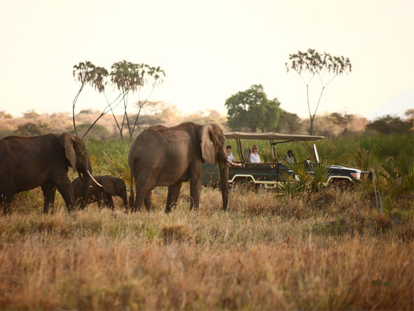 Discover Kenya Wilderness Adventure - Open-sided game vehicles