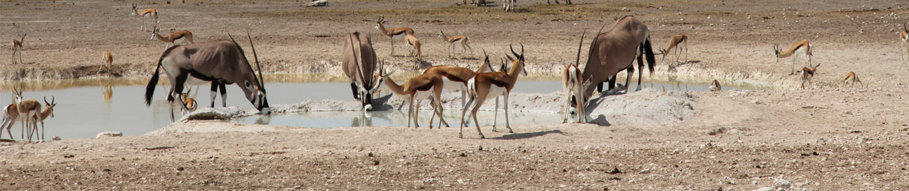 Great Namibian Safari