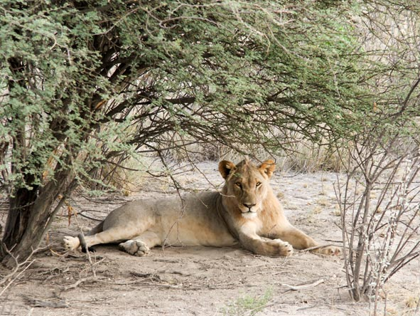 Great Namibian Safari - Big cats
