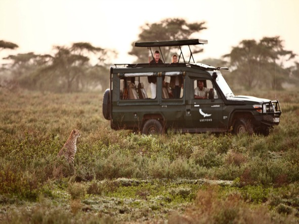 Serengeti Under Canvas - Game drives
