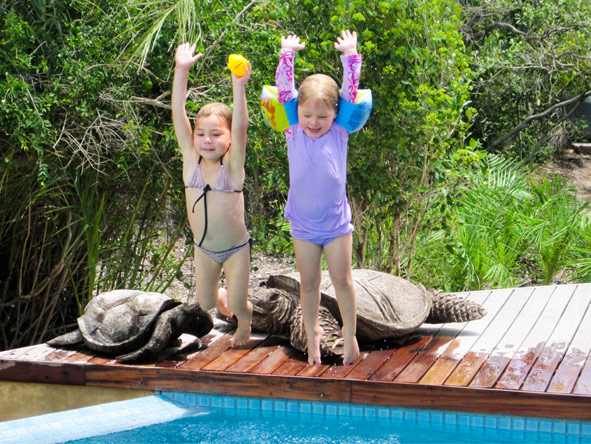 Luxury Family Safari & Beach Adventure - Swimming pools