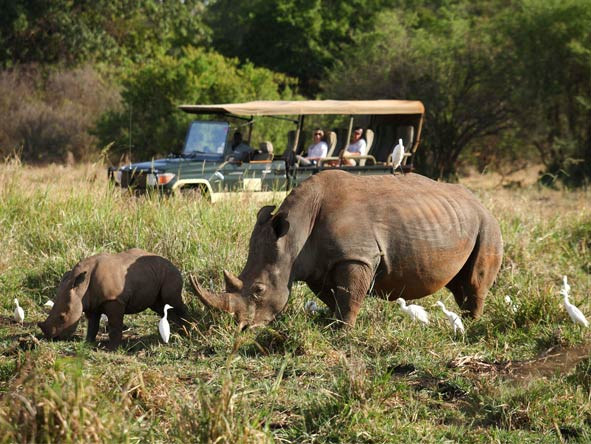 Lavish Getaway Flying Safari - Rhinos