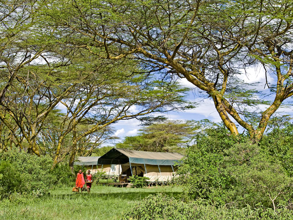 Laikipia & Mara 4x4 Safari - Spacious tented suites