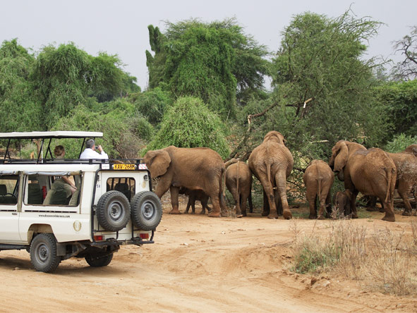 Experience Kenya Private 4x4 Safari - Photographic opportunities
