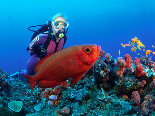 Best of KwaZulu Natal Self-drive - Scuba diving